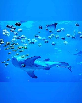 ATL aquarium