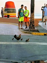 Chickens crossing at the Southernmost Point